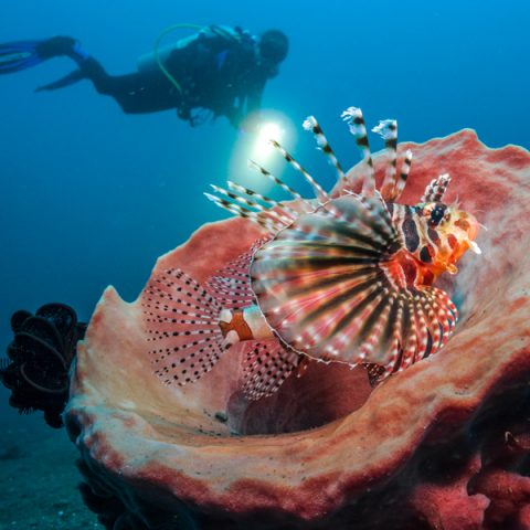 Tobias-Friedrich-DC2000-Gallery-Images-SeaLife-Cameras_0015_20180402_BELOW_SURFACE_TOBIAS_FRIEDRICH_0584