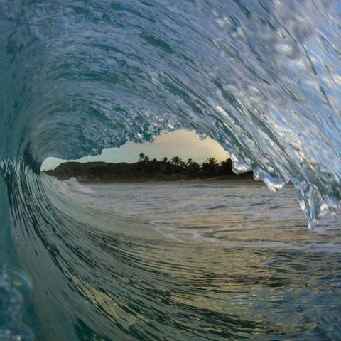 wavetube2-harry-large_0